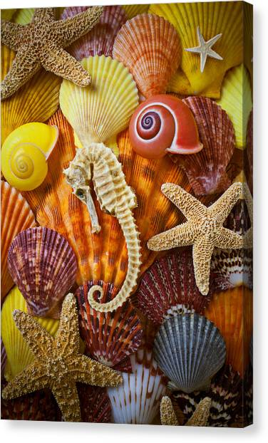 Seashells Canvas Print - Seahorse And Assorted Sea Shells by Garry Gay
