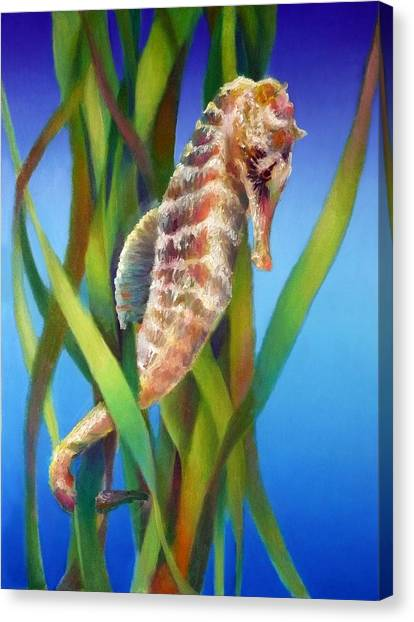Seahorse I Among The Reeds Canvas Print