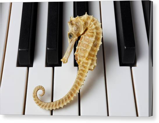 Seahorses Canvas Print - Seahorse On Keys by Garry Gay