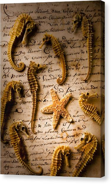 Seahorses Canvas Print - Seahorses And Starfish On Old Letter by Garry Gay