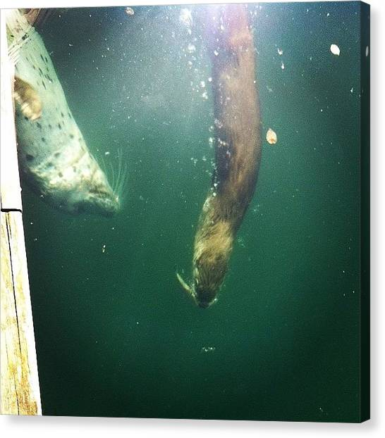 Otters Canvas Print - #seal Attempting To Steal Fish From by Landlubber ChubbyNinja