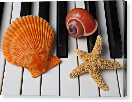 Compose Canvas Print - Seashell And Starfish On Piano by Garry Gay