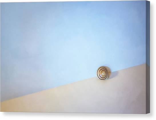 Spiral Canvas Print - Seashell By The Seashore by Scott Norris