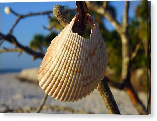 Cockelshell On Tree Branch Canvas Print