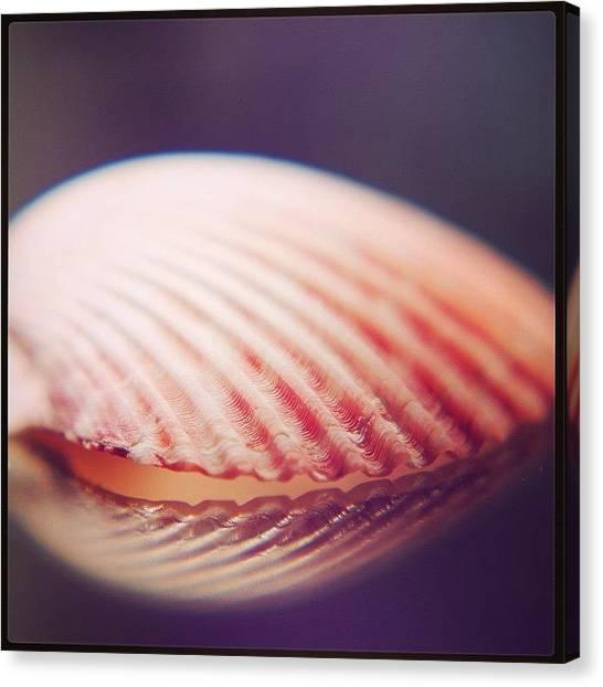 Seashells Canvas Print - Seashell by Heidi Hermes