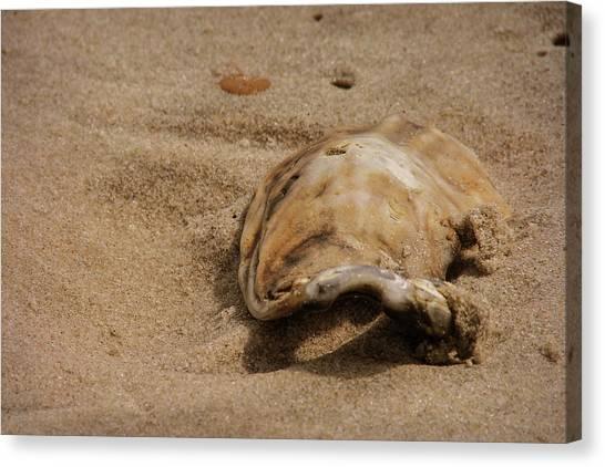 Seashells At The Seashore Canvas Print by JAMART Photography