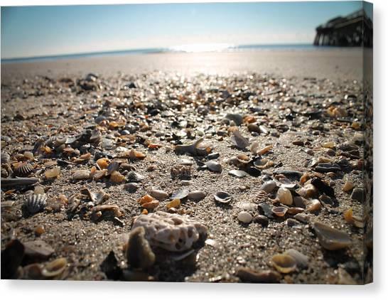 Seashells By The Seashore Canvas Print