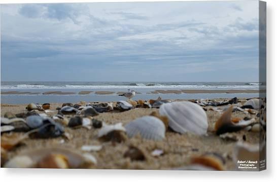 Seashells Seagull Seashore Canvas Print