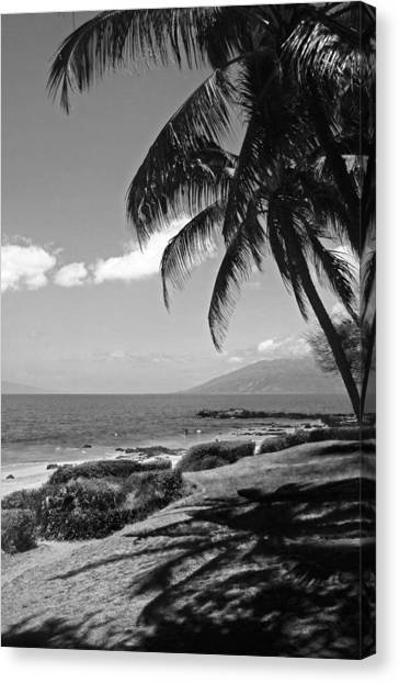 Seashore Palm Trees Canvas Print