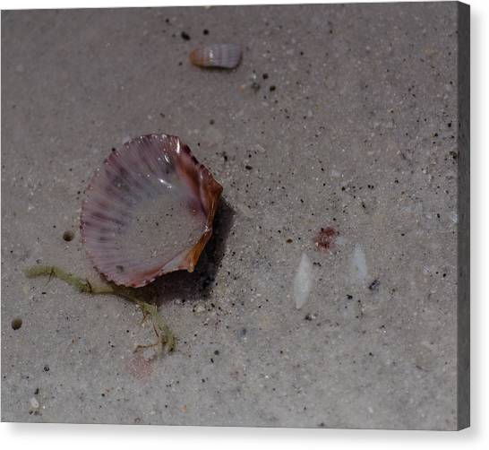 Seashore Treasues In Pink Canvas Print