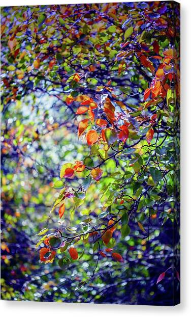 Wine Country Canvas Print - Seasons Change by Az Jackson