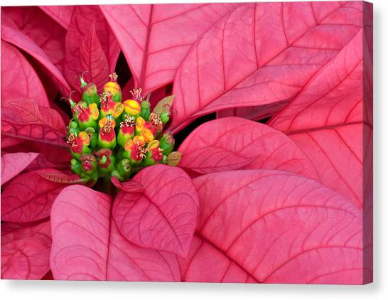 Season's Greetings Canvas Print by Margaret Barry