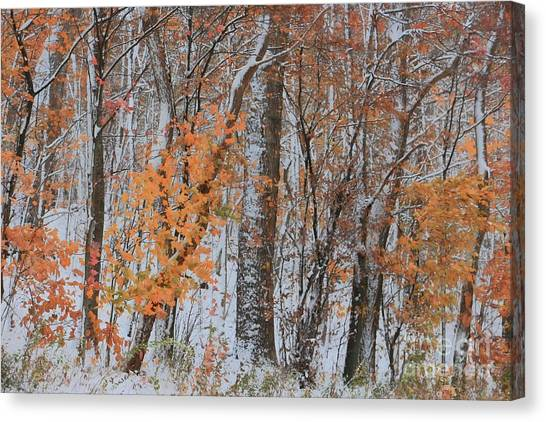 Blue Camo Canvas Print - Seasons Overlapping by Benanne Stiens