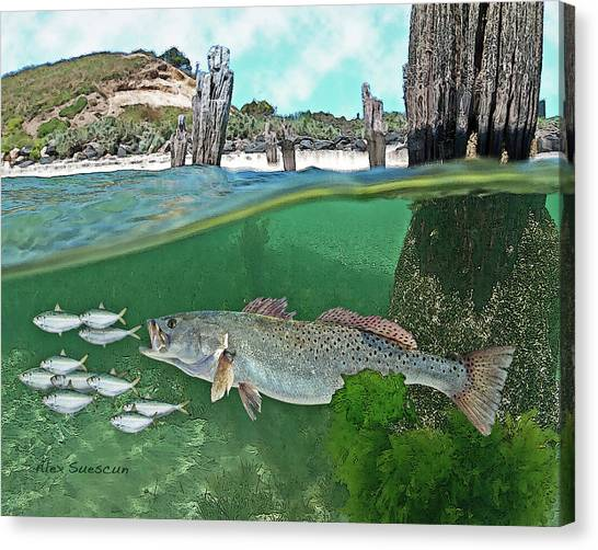 Seatrout Attack Canvas Print