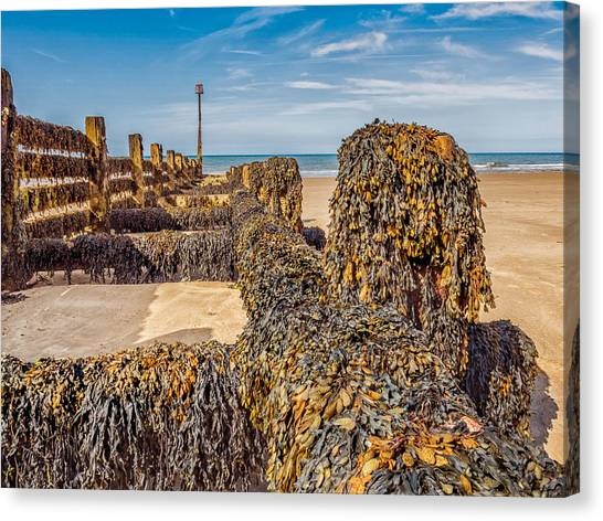 Canvas Print featuring the photograph Seaweed Covered by Nick Bywater
