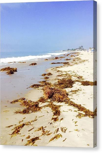 White Sand Canvas Print - Seaweed by Tiffany Marchbanks