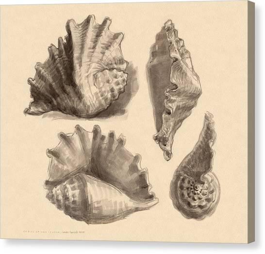 Seba's Spider Conch Canvas Print