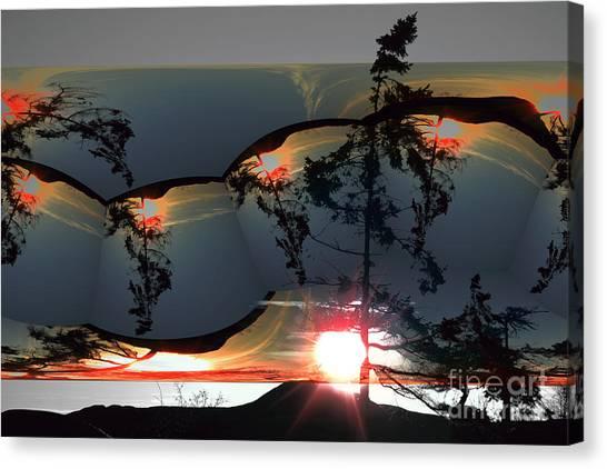 Sechelt Tree 12 Canvas Print