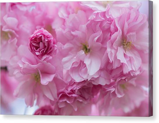 Secret Life Of Flowers Canvas Print