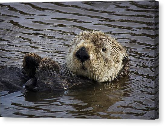 See Otter Posing Canvas Print