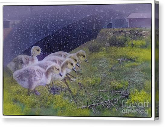 Seeking Shelter From The Storm Digital Artwork By Mary Lou Chmur Canvas Print