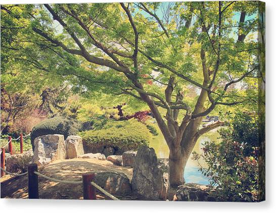 Japanese Maple Canvas Print - Seeking Truth by Laurie Search