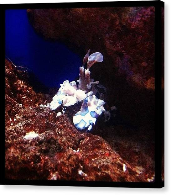 Aquariums Canvas Print - Seen At #aquarium by Mylow Siew