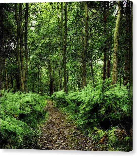 Forests Canvas Print - Seeswood, Nuneaton by John Edwards