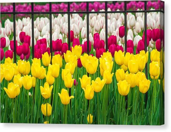 Segregated Spring Canvas Print