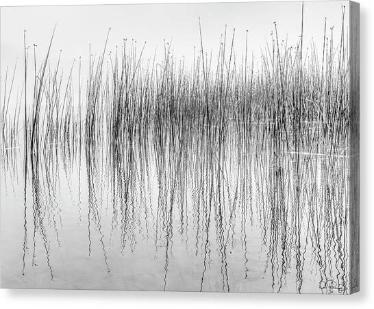 Canvas Print featuring the photograph Seismograph by Dee Browning