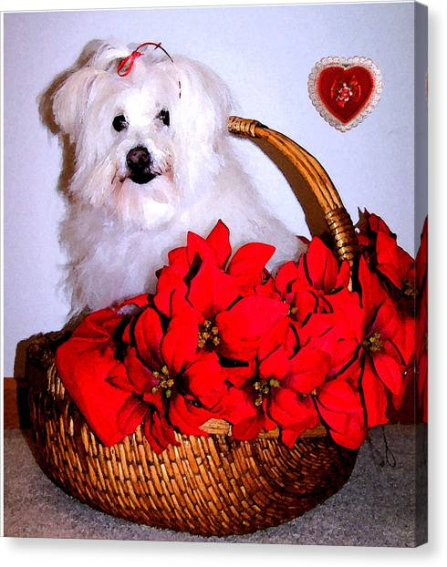 White Maltese Canvas Print - Sending Love by Vijay Sharon Govender