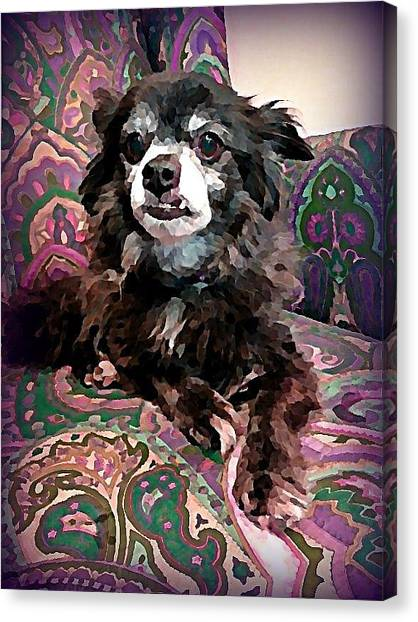 Canvas Print - Senior Chi by Raven Hannah