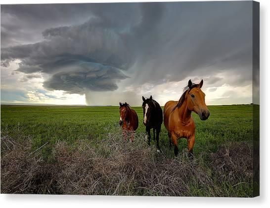 Sensing The Storm #3 Canvas Print