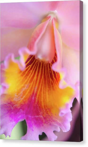 Sensual Floral Canvas Print