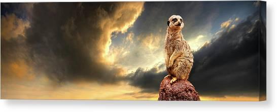 Meerkats Canvas Print - Sentry Duty by Meirion Matthias