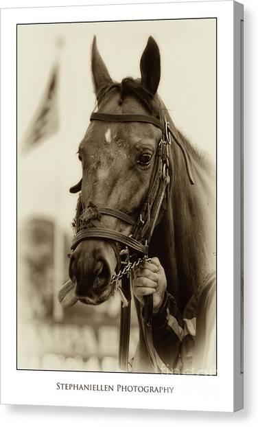 Sephia Racehorse Canvas Print