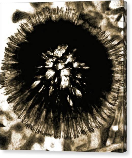 Sepia Dandelion Canvas Print