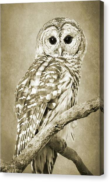 Sepia Owl Canvas Print