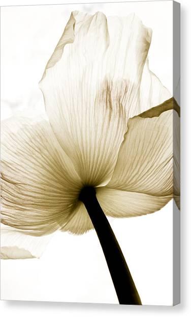 Sepia Poppy Flower Canvas Print by Frank Tschakert