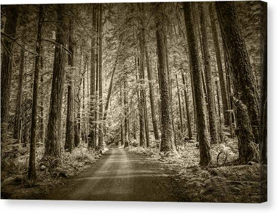 Randy Moss Canvas Print - Sepia Tone Of A Road In A Rain Forest by Randall Nyhof