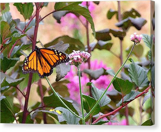 September Monarch Canvas Print