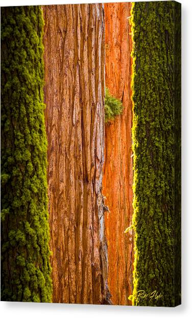 Sequoia Abstract Canvas Print