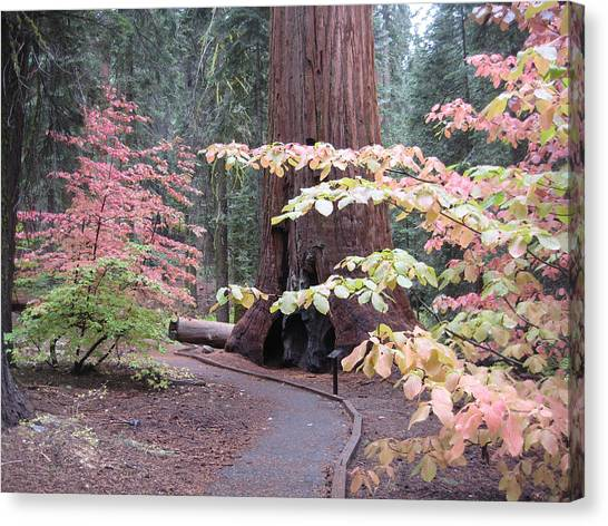Pine Trees Canvas Print - Sequoia  Trees 3 by Naxart Studio