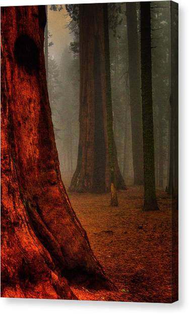 Sequoias In The Clouds Canvas Print