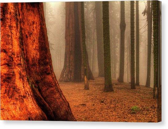 Sequoias Touching The Clouds Canvas Print