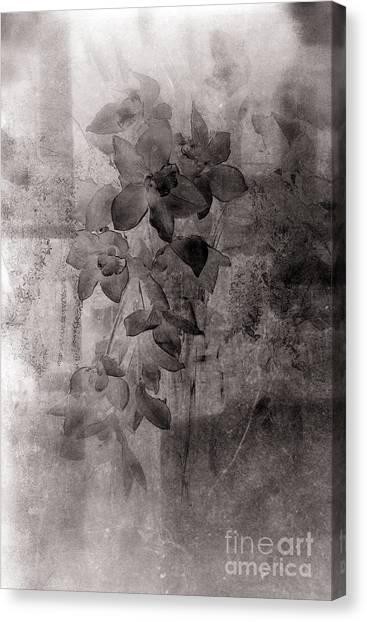 Serenade Canvas Print