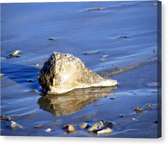 Conch Shells Canvas Print - Serene Conch Shell At Isle Of Palms by Elena Tudor