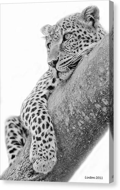 Serengeti Leopard Canvas Print