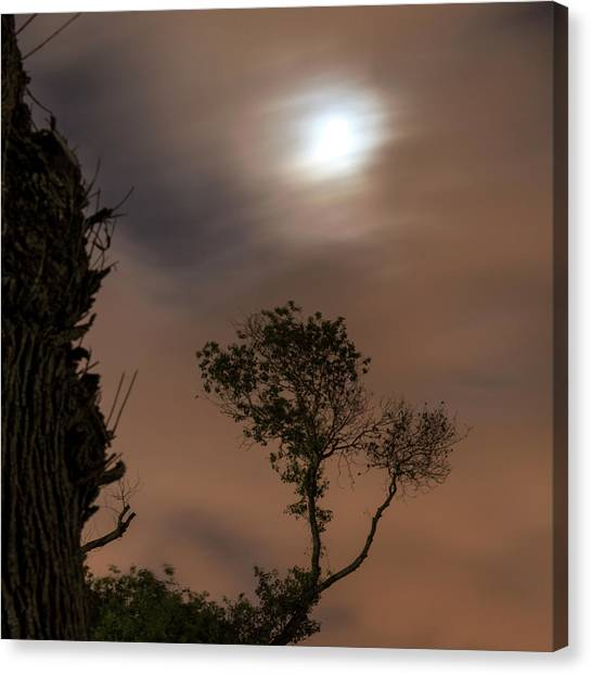 Canvas Print featuring the photograph Serenity... by Dubi Roman