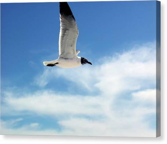 Serenity Seagull Canvas Print